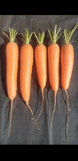 JamesKearns5carrots